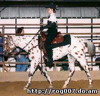 американский верховой пони, породы лошадей, фото, фотография