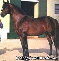 альтер-реал, породы лошадей, фото, фотография