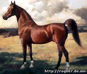 американская верховая лошадь, породы лошадей, фото, фотография