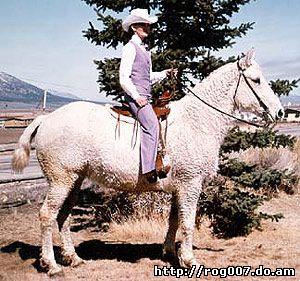 американский кучерявый башкир, породы лошадей, фото, фотография
