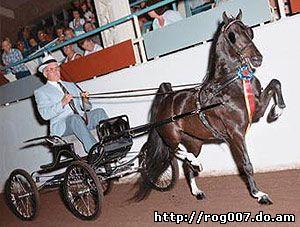 американский шетландский пони, фото, фотография, породы лошадей